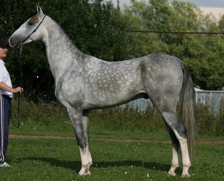 Рейтинг самых красивых и самых необычных лошадей со всего мира |