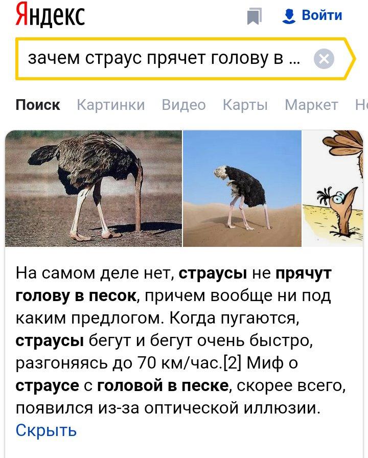 О том почему страусы прячут головы в песок, правда ли, что это от страха