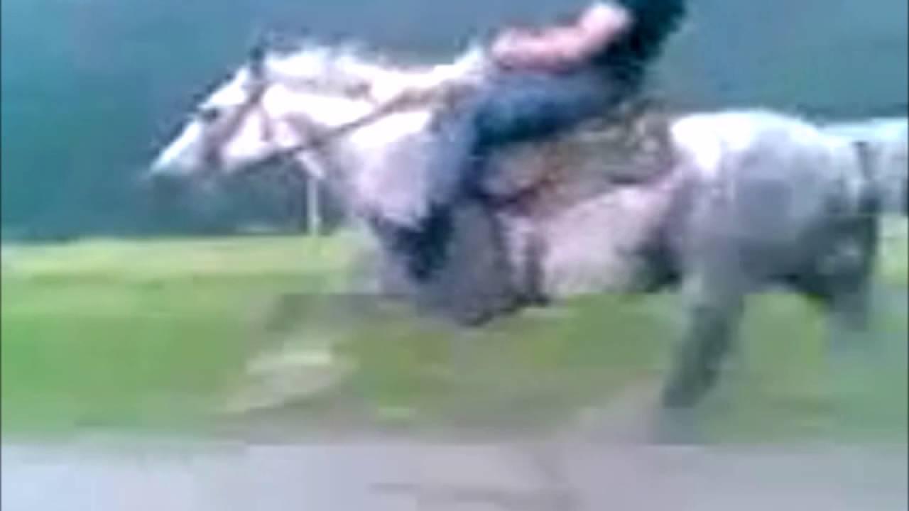 Какая максимальная и минимальная скорость у лошади?