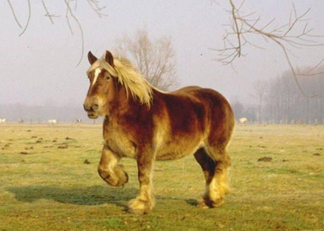 Самая дорогая лошадь в мире - сорок миллионов долларов