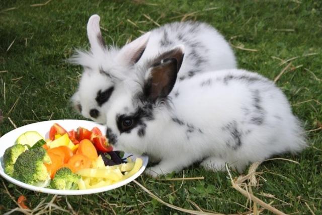 Можно ли давать клевер домашним кроликам: как правильно и в каких количествах - гид по огороду