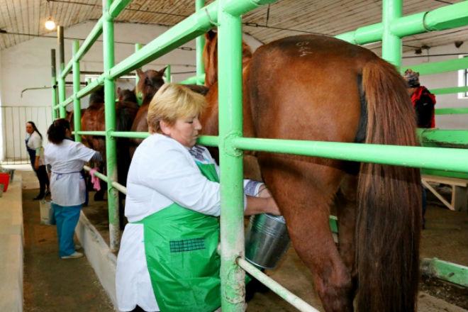 Как называется лошадиное молоко - мечети мира