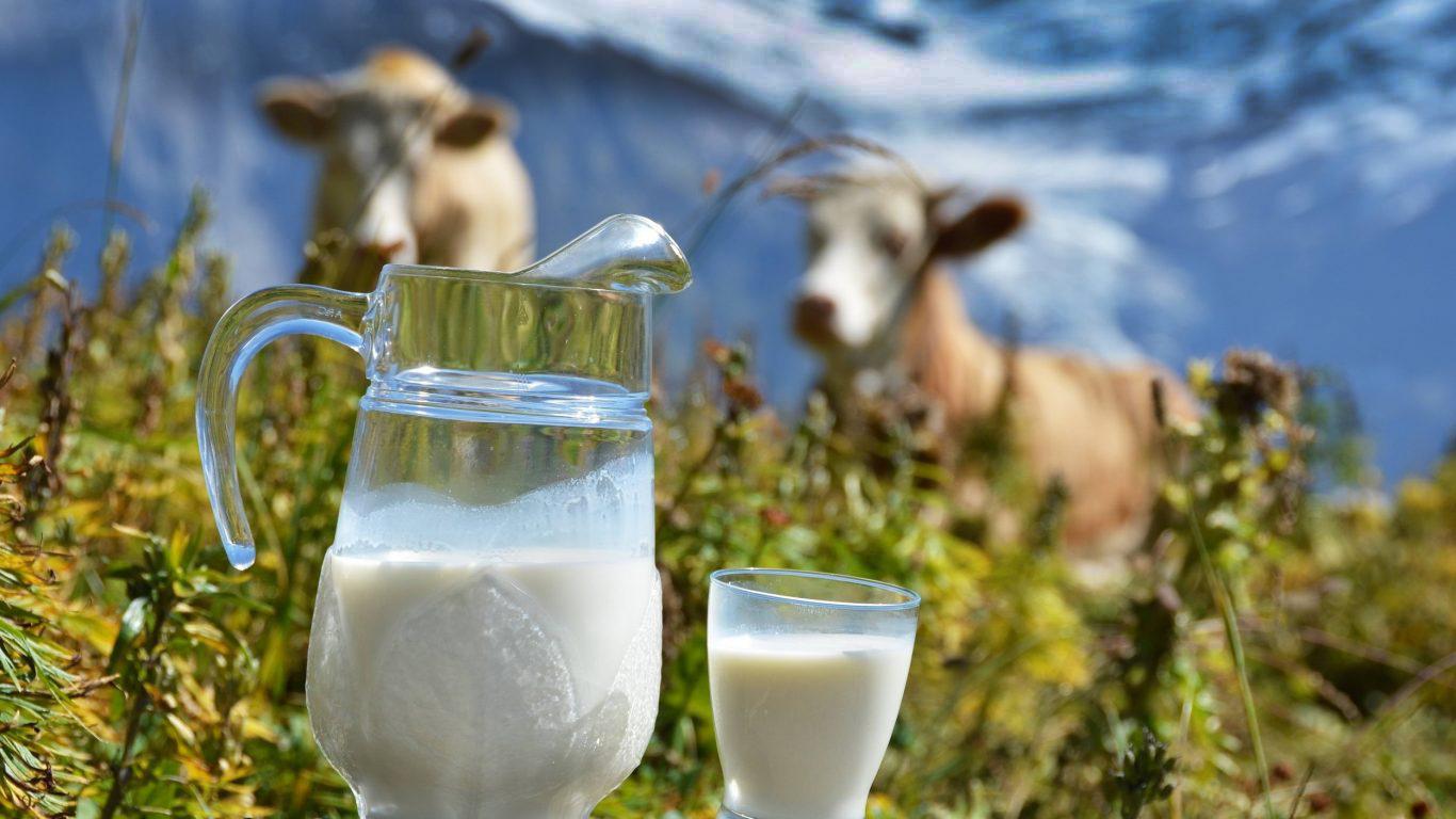 Парное молоко: это что значит, чем полезно, почему если пить такой продукт, быстро поправишься, польза и вред свежего козьего и коровьего, температура, жирность