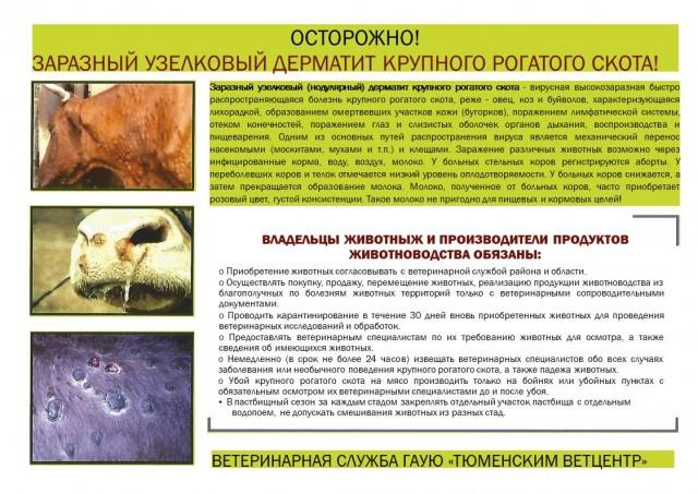 Нодулярный дерматит крупного рогатого скота инструкция - badacne